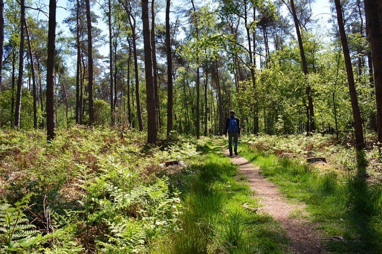 open bos met Varens Maarheeze