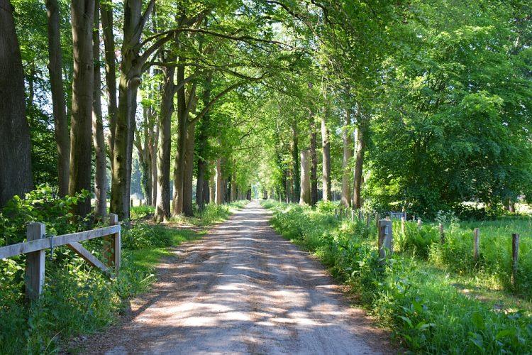wandelen Landgoed Slangenburg Doetinchem