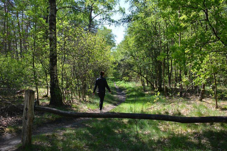 wandelen bij de Maaij-Liskes Bergeijk