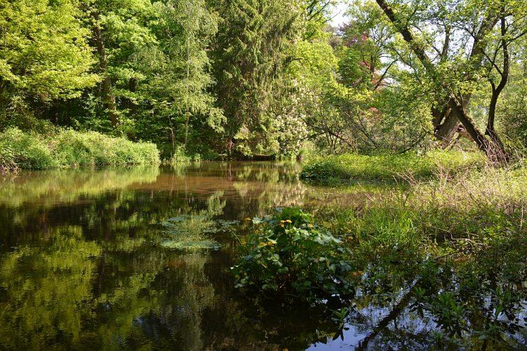 wandelen door beekdal van de Swalm Limburg