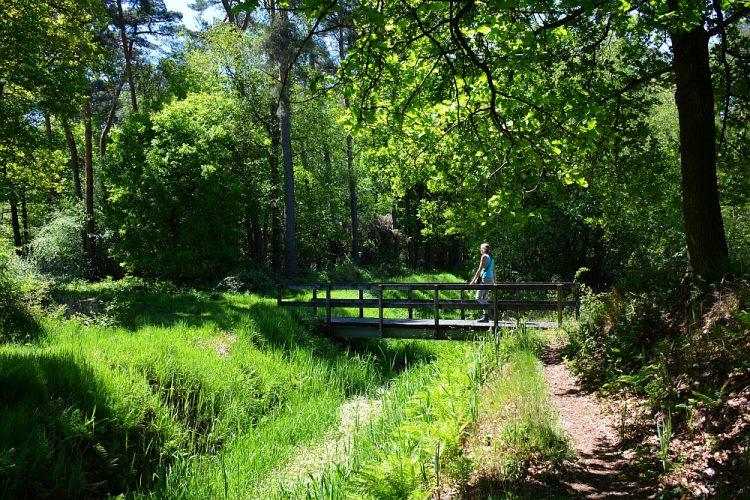 wandelen door het Weerterbos
