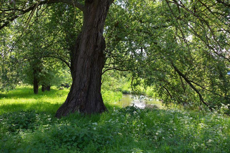 wandelen door het dal van de Swalm Limburg