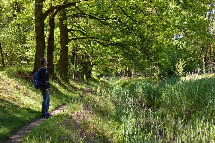 wandelpad langs bosbeek de Oude Graaf Weerterbos