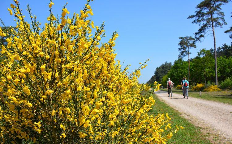 wandelroute bij Swalmen Limburg