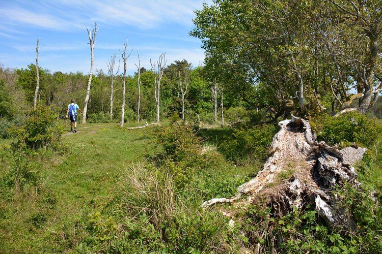 Groene Wissel Castricum wandelroute 19 kilometer