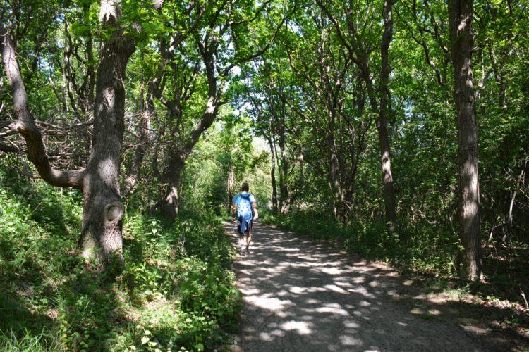 bospad Noordhollands Duinreservaat