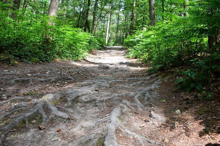 bospad in Vijlenerbossen Limburg