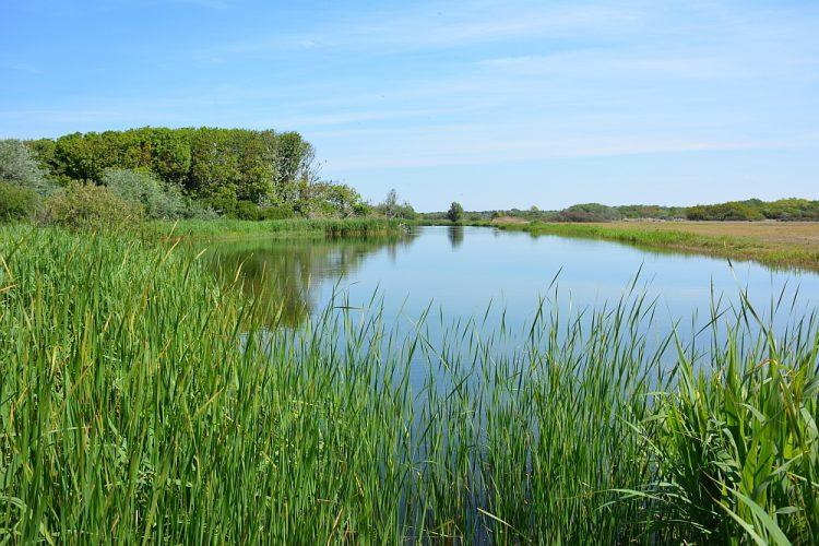 Groene Wissel Castricum duinmeer in Noordhollands Duinreservaat