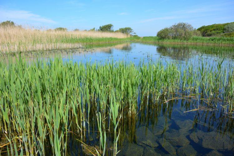 duinwater bij Castricum PWN waterinlaat Groene Wissel Castricum