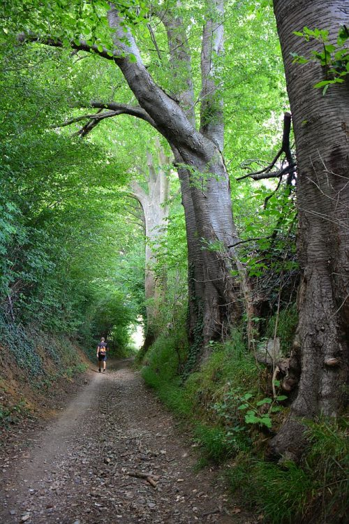 holle weg met oude bomen Vijlen Limburg
