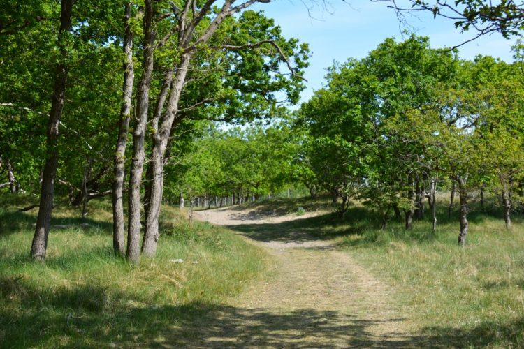 wandelpad bij Castricum Noordhollands Duinreservaat Groene Wissel Castricum