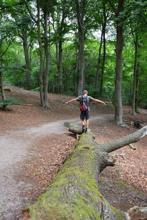 oude bomen op Landgoed Duno