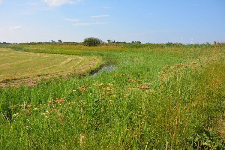 Nieuwe natuur en grasdijk langs de Kromme Gouw bij Kolhorn Noord-Hollandpad