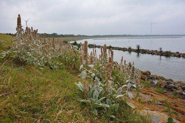 oevers van het Amstelmeer