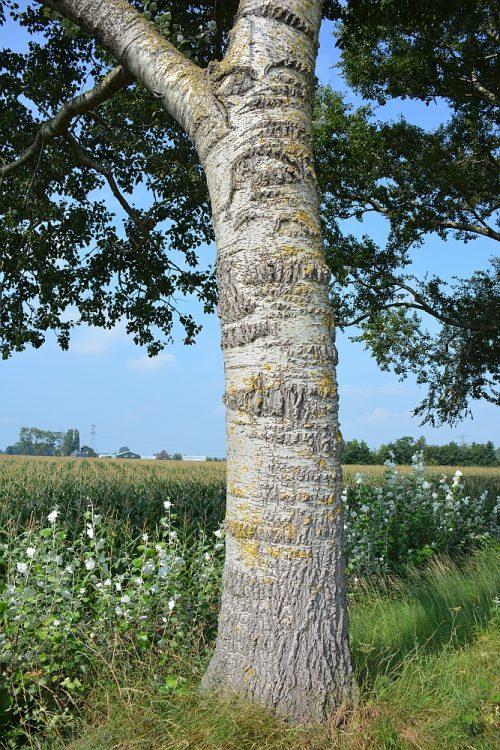 prachtige bomen langs het Noord-Hollandpad etappe 8