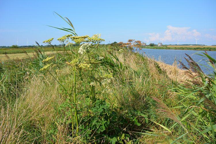 ruige oevers langs de Kromme Gouw bij Kolhorn Noord-Hollandpad