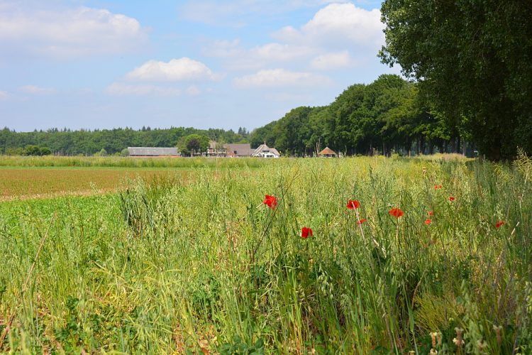 typisch landschap in de Achterhoek