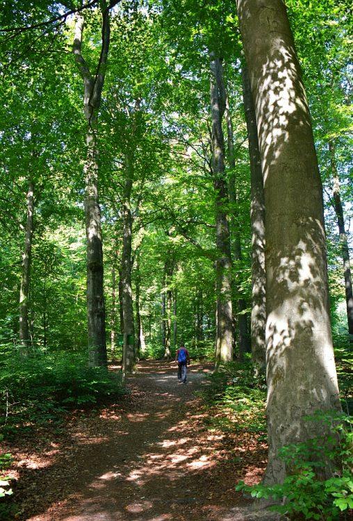 wandelen landgoed de Hemelse Berg Oosterbeek