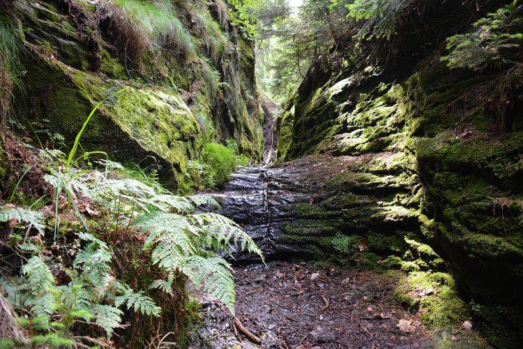 groene vallei in de Sächsische Schweiz