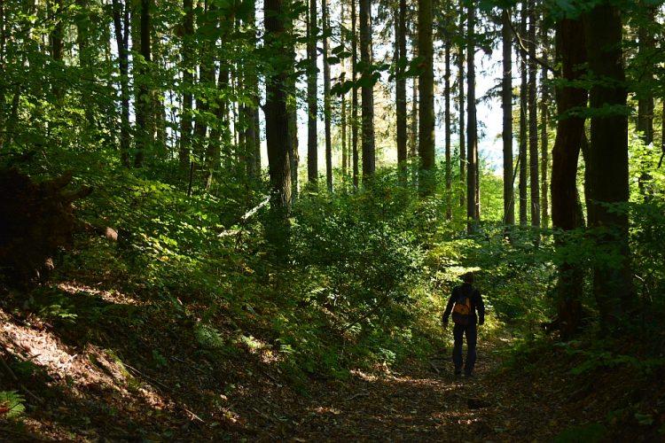 Onderste Bos Zuid-Limburg