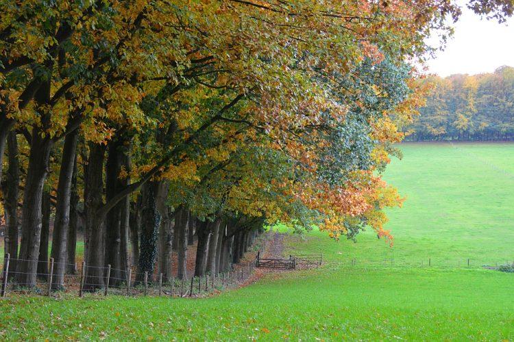 Op de rand van bos en de velden landgoed Mariënburg Arnhem