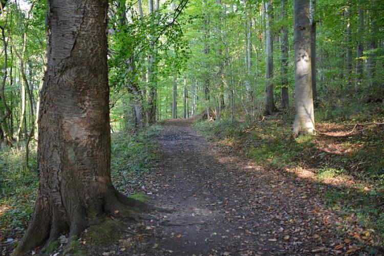 bos bij Slenaken Limburg