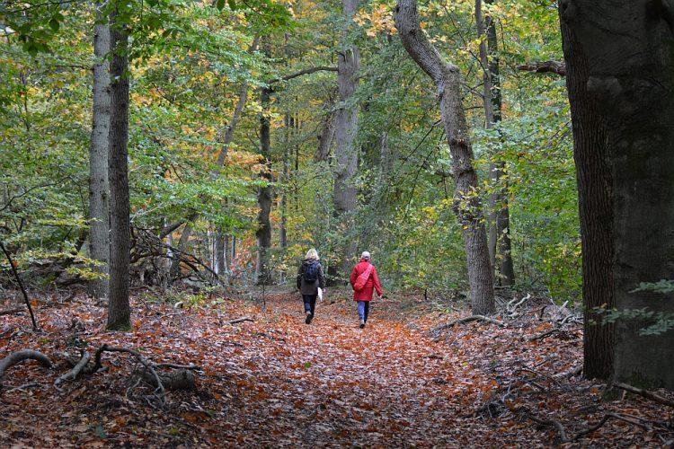 herfst boswandeling bij Arnhem