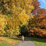 herfstkleuren in Park Sonsbeek Arnhem