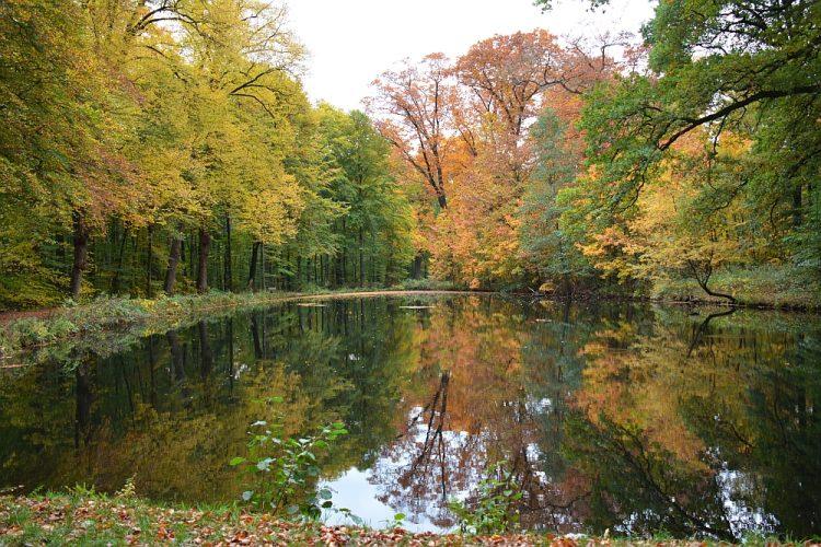 herfstkleuren in de bossen bij Arnhem, Groot Warnsborn