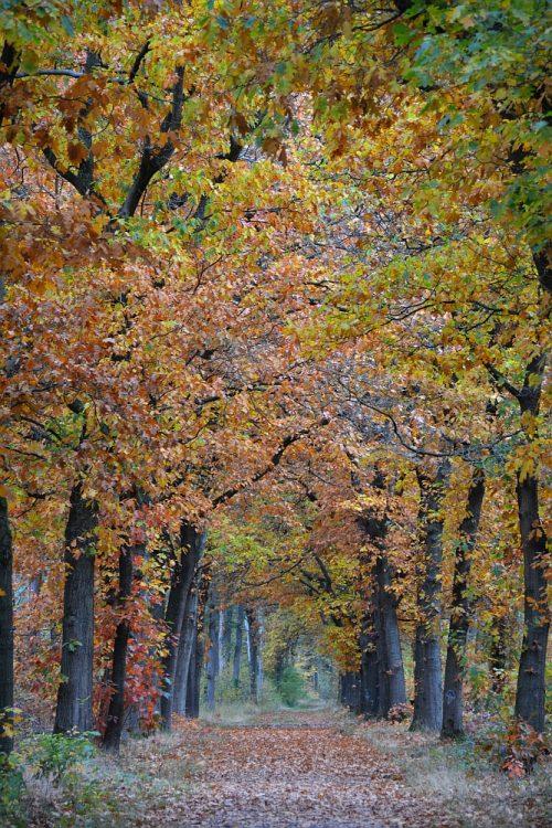 herfstkleuren tijdens de Trage Tocht Arnhem noord