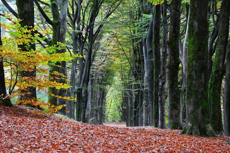 herfstwandeling Landgoed Boschveld