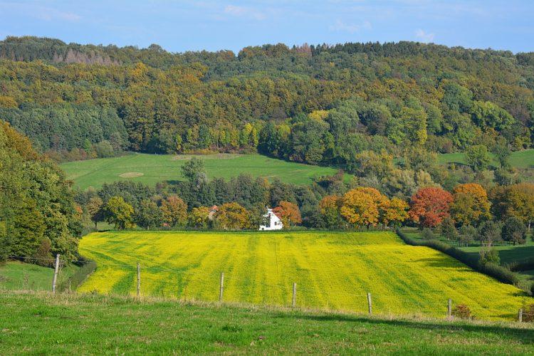 mooie herfstwandeling in Zuid-Limburg
