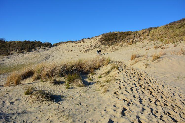 duinen in Boswachterij Westerschouwen