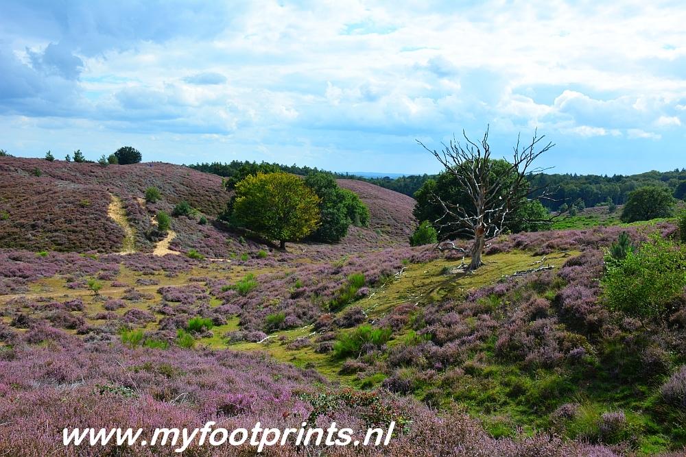 heidevelden Posbank Arnhem foto van de maand