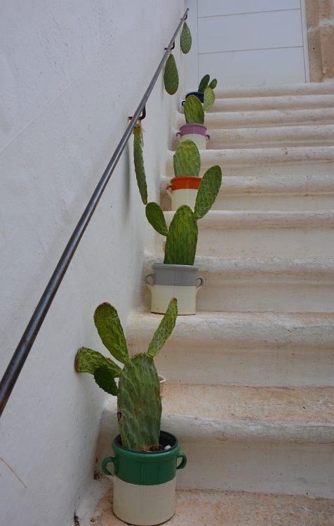 trap met cactussen Locorotondo Puglia
