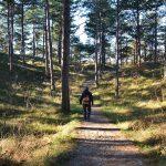 wandelen Boswachterij Westerschouwen Zeeland