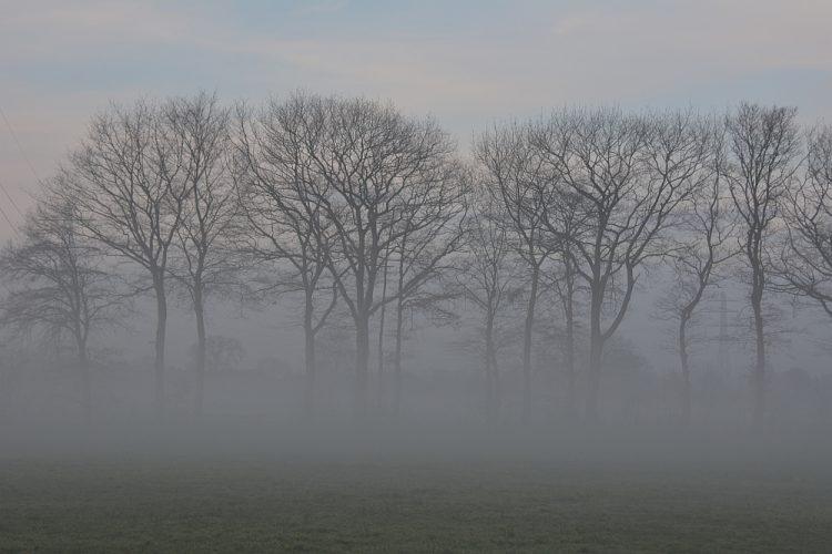 bomen in de mist bij Lunteren