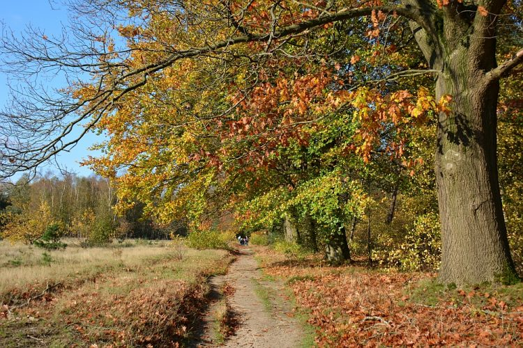 bospad bij Rhenen