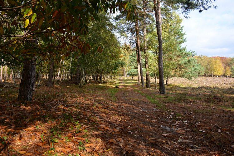 heidevelden Plantage Willem III Rhenen
