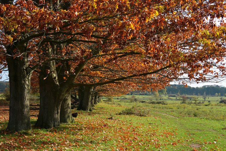 herfstkleuren op Plantage Willem III Rhenen