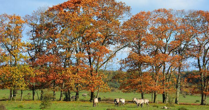 konikpaarden op Plantage Willem III bij Rhenen Trage Tocht Kwintelooijen