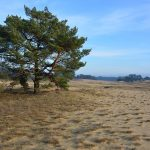 open vlaktes van het Wekeromse Zand bij Lunteren