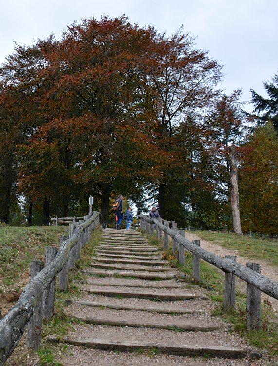 trap bij natuurgebied Kwintelooijen tijdens de Trage Tocht Kwintelooijen
