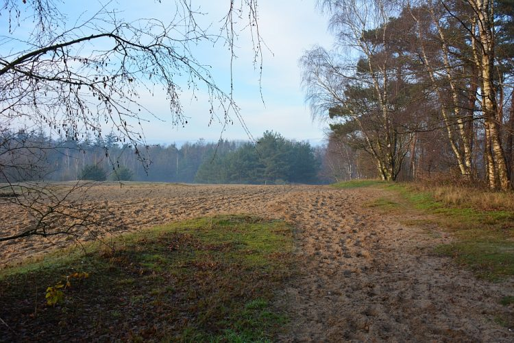 voormalig zandafgraving de Goudsberg Lunteren