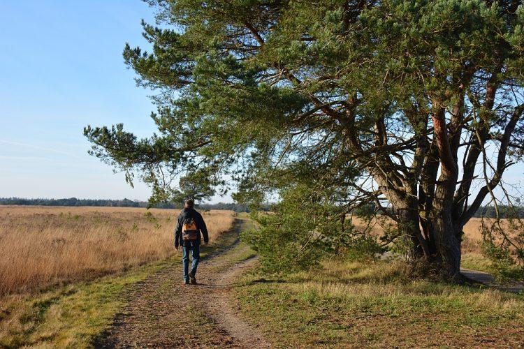 wandelen op de Ermelosche Heide
