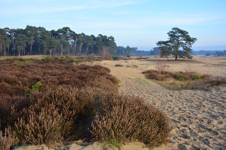 wandelen op het Wekeromse Zand