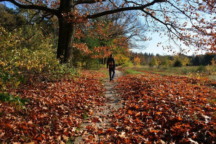 wandelen rand bos en akkers bij Rhenen tijdens Trage Tocht Kwintelooijen