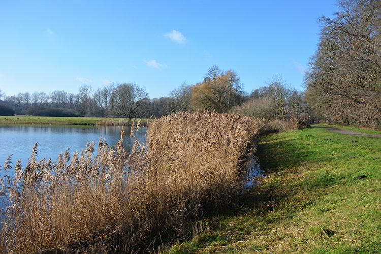 Wandelen rond Helmond Warandepark