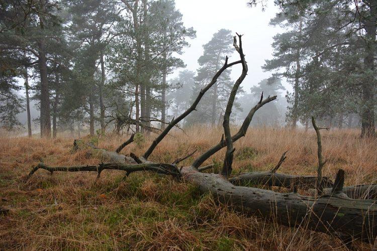 boomstronk in het Deelerwoud