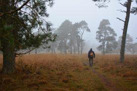 Trage Tocht Deelerwoud bospaadje in het Deelerwoud